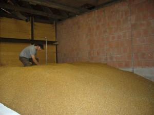 Prüfen der Getreidequlität und der Lagerverhältnisse