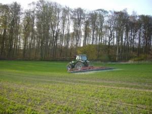 Striegeln des Winter - Weizen im Frühjahr mit dem Hatzenbichler Hackstriegel